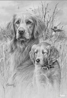 animals art - drawings - dogs - pencil drawings