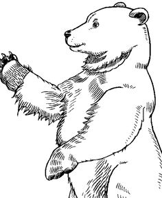 wild animal coloring page large standing bear