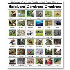 teeth of herbivores carnivores and omnivores - Google Search