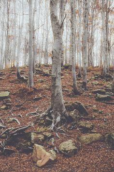 "elenamorelli: ""{ roots and dead leaves } """