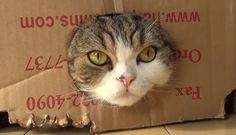 cats-love-boxes-and-bags/slang