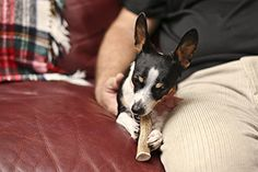Are Antlers Bad for Dogs? (And How to Make Your Own)