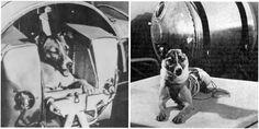 De eerste hond in de ruimte. Hoe is het hem vergaan?