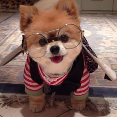 cute puppies in glasses - puppies with glasses ; puppies with glasses nerd ; cute puppies with glasses ; puppies in glasses ; cute puppies in glasses Cute Little Puppies, Cute Little Animals, Cute Dogs And Puppies, Baby Animals Super Cute, Cute Funny Animals, Baby Dogs, Funny Dogs, Cute Cats, Tiny Puppies