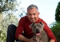 Tips for Establishing Leadership with Your New Dog | Cesar Millan