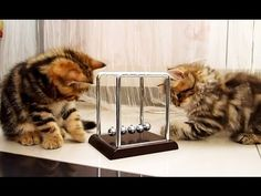 Kittens study physics