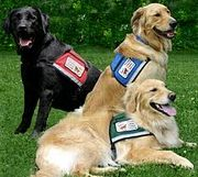 """Sit, Stay, Bring Me My Medicine: How Service Dogs Can Benefit People with Disabilities."" http://www.nmeda.com/blogs/nmeda-blog/ #servicedogs #NMEDA"