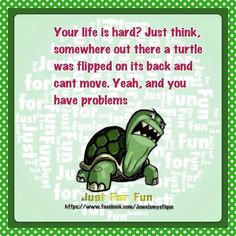 Your big tortoise is a source of pleasure to you. You bought the turtle so you can have more fun with family members and friends. Turtle Day, Turtle Rock, Turtle Life, Tortoise Care, Tortoise Turtle, Baby Sea Turtles, Cute Turtles, Turtle Quotes, Best Quotes