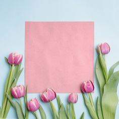 Tulips near pink paper Original Iphone Wallpaper, Iphone Wallpaper Glitter, Black Phone Wallpaper, Flower Phone Wallpaper, Boarder Designs, Creative Circle, Photo Collage Template, Flower Video, Pink Paper