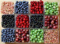 summer fruits...voirlavieenrosegirl