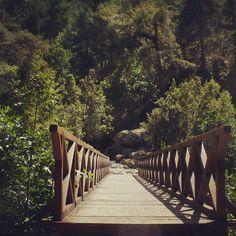 #ponte #bridge #forest #wildness #amazing #nature #instanature #mountain #green #trees #climbing #meta #scopo #destiny #novellaorchidea #novella #orchidea #raccontierotici #racconti #ebook
