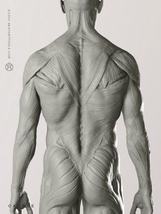 Exceptional Drawing The Human Figure Ideas. Staggering Drawing The Human Figure Ideas. Human Anatomy For Artists, Human Anatomy Drawing, Zbrush Anatomy, Human Body Anatomy, Human Figure Drawing, Muscle Anatomy, Guy Drawing, Life Drawing, Anatomy Back