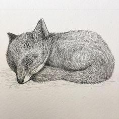 #Repost ✏@agnese.leone ✏ https://agneseleone.wordpress.com/ #littlefox #fox #sleepingfox #🦊 #illustration #workinprogress #copicmultiliner #micronpen #ink #blackandwhite #foxportrait #animals #animalportrait #foxdrawing #artshare #supportartists #drawing #design #inspiration #creativity #illustrator
