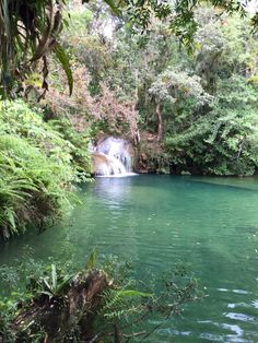 Kubanischer Urwald