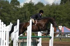 My mare Aspen loving jumping at Thunderbird Show Park in Langley BC.