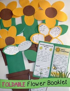 Life cycle of plants foldable booklet/lapbook. LOTS of creative and fun ideas for getting kids writing about science while teaching about the life cycle of plants. Also includes FREE printable anchor charts for photosynthesis and parts of a plant. Kids Writing, Teaching Writing, Teaching Science, Science For Kids, Science Activities, Science Ideas, Teaching Kids, Sequencing Activities, Teaching Plants