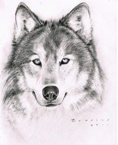Wolf.  By Robert Brocius