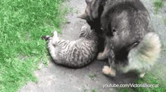 Video: Dogs Annoying Cats With Their Friendship