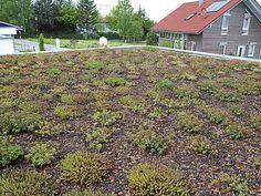 Begrünte Dächer : Biotope, die Kleinlebewesen aller Art einen Lebensraum in der Stadt bieten