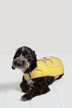 All the classical nautical styling of our bestselling Seafolly Jacket, redesigned for your four-legged friend. Part of our new range of dog accessories, the Dogfolly Coat will keep your pooch warm and dry, no matter how far you roam. RSPCA Approved.