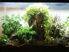 forest vivarium - Google Search