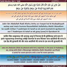 Mafhum-e-Hadith: 7 Aadmiyon ki taraf se ek Gaay (cow) ya ek oont ki Qurbani kar saktey hain