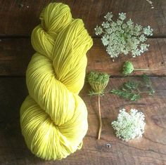 Wren House Yarns: naturally dyed yarn from Queen Anne's Lace (yellow plants beautiful) Shibori, Natural Dye Fabric, Natural Dyeing, Impression Textile, Spinning Yarn, Queen Annes Lace, Wren House, How To Dye Fabric, Hand Dyed Yarn