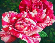 Цветочное великолепие Fiona Craig | РОЗЫ