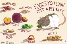 What foods were you surprised to see rats could or couldn't eat? Pet Rodents, Hamsters, Rat Cage Accessories, Rat Food, Rat Care, Rat House, Les Rats, Rare Animals, Strange Animals