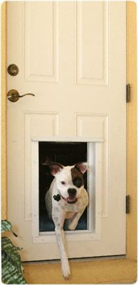 Micha needs in giant size-.Plexidor Electronic RFID Pet Door - lol dad says he's so big he can just use a regular door! Now to teach him to open it! Maybe we could just get a remote operator for the front door?