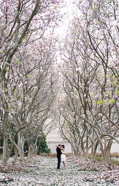 Amazingly beautiful DC cherry blossom wedding photo! #wedding #weddinginvitations