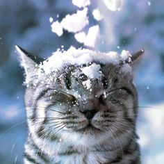 This Kitty Wished for a White Christmas!