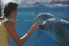 Playing with the dolphins at sea world Sea World, Dolphins, Whale, Angels, Whales, Angel