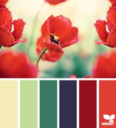 flora palette with our red sofa?