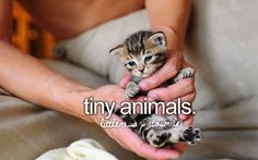 tiny animals are the cutest and they are so freaking adorable i love the especially baby kittens -just girly things-