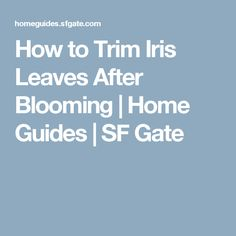 How to Trim Iris Leaves After Blooming | Home Guides | SF Gate