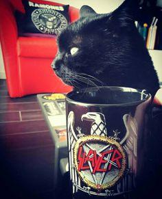 Slayer Cup&Cat ---> via Slayer Nation Worldwide