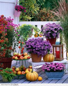 Balcony decoration with beautiful fall flowers - Little Piece Of Me Balcony Flowers, Porch Garden, Autumn Cozy, Autumn Fall, Plantar, Autumn Garden, Fall Flowers, Autumn Inspiration, Porch Decorating