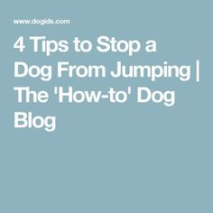 Dog Training And You: Simple Ideas To Make It Work -- For more information, visit image link. #PuppyTraining