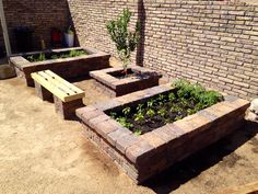 raised garden beds from our house. Vegetables, herbs, and lime tree in the. -Stone raised garden beds from our house. Vegetables, herbs, and lime tree in the. Stone Raised Beds, Raised Garden Beds, Raised Gardens, Brick Garden, Wall Seating, Garden Stones, Fountain, Lime, Herbs
