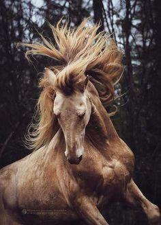 Portrait cheval cabré