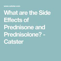 prednisone and hunger