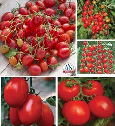 Fantastico Grape Tomato