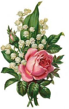 lily of the valley and roses botanical drawing tattoo - Google Search