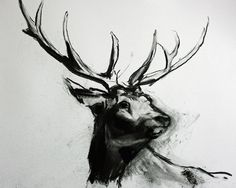 Charcoal stag on paper as part of project danke. March 27, 2015