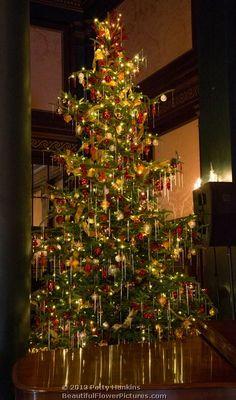 Christmas Tree in the Organ Room - Longwood Gardens © 2013 Patty Hankins
