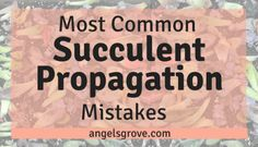 Most Common Succulent Propagation Mistakes