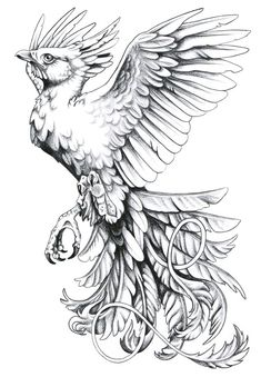my mom wants a phoenix but shes very picky so ive been on the look out. Phoenix Tattoo flash by *harpyja Phoenix Bird Tattoos, Phoenix Tattoo Design, Rising Phoenix Tattoo, Phoenix Feather, Phoenix Design, Tattoo Sketches, Tattoo Drawings, Black Tattoos, Star Tattoos