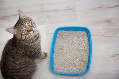 Paras kissanhiekka – kissanhiekkatyypit vertailussa: hyödyt ja haitat Borax Uses, Cat Behavior, Grooming Kit, Cat Health, Litter Box, Dog Owners, Clean House, Home Remedies, Animals