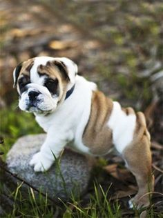 love the wrinkles and little round tummy..